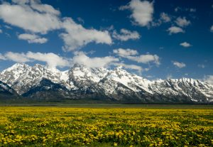 The Best of Grand Teton National Park