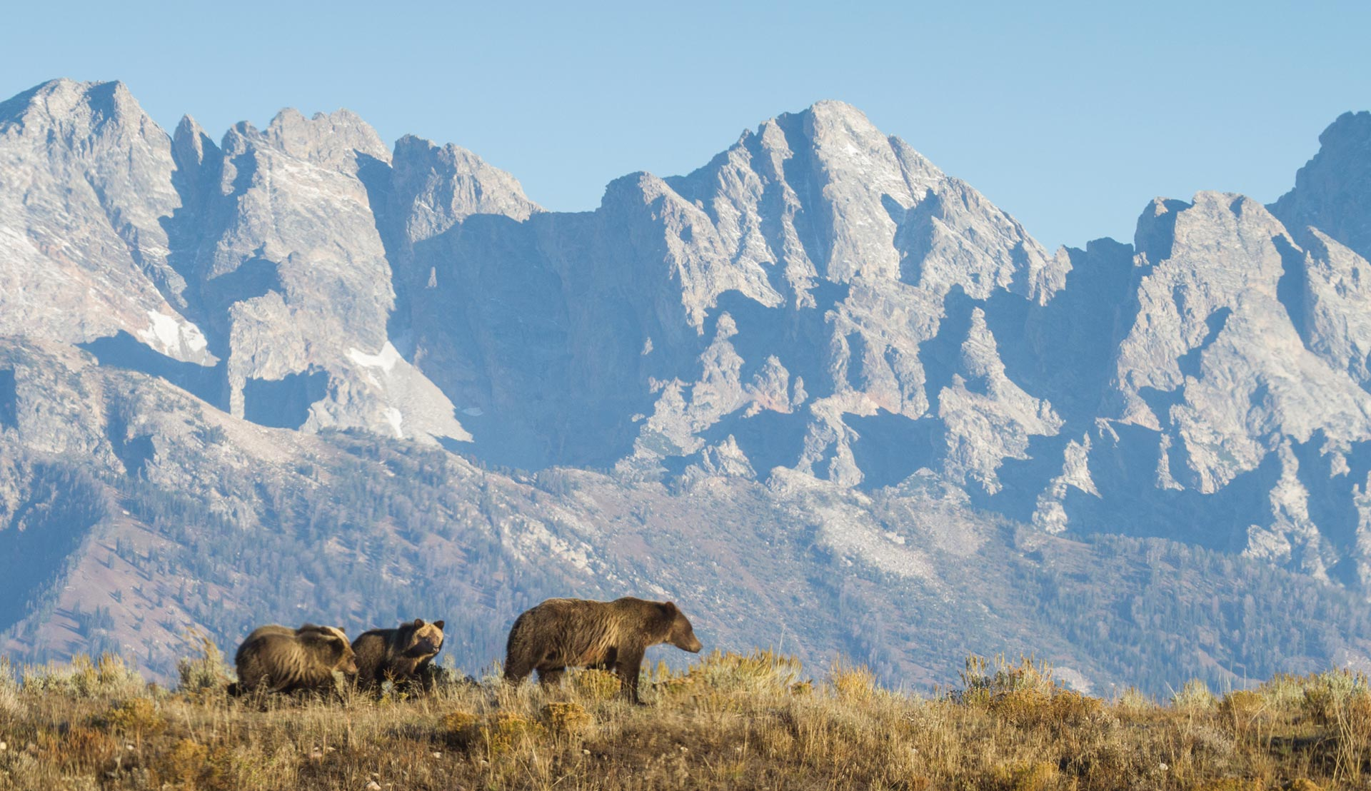 jackson hole wildlife adventures